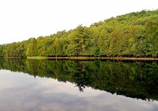 Trees reflecting in the water. This picture shows the natural beauty spectacular greenery and water reflection Royalty Free Stock Photo