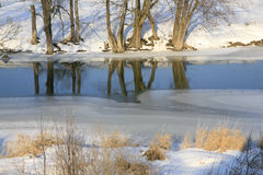 Trees Reflecting in the Water in Winter. The ice is beginning to form and the trees along the edge are refleted in the water. This is in early January just Royalty Free Stock Photo