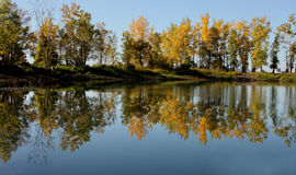 Trees reflection Stock Photography