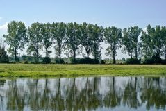Trees with reflection Royalty Free Stock Photography