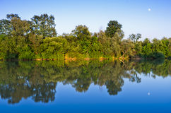 Trees with reflection Stock Photo