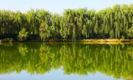 Trees and reflection Royalty Free Stock Photo