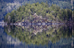 Trees reflection Stock Images