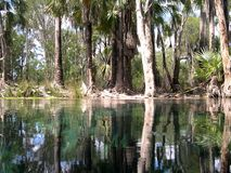 Trees reflection, australia Royalty Free Stock Photography