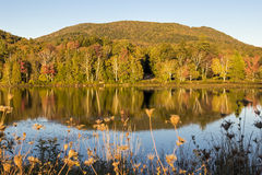 Trees reflection at autumn Royalty Free Stock Photo