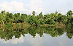Trees reflection Royalty Free Stock Photo