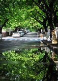 Trees reflection, Qingdao, China royalty free stock photo
