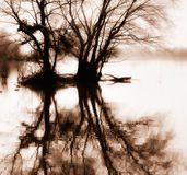 Trees and reflection in sepia Stock Photography