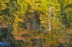 Trees reflection in water. Autumn leaves on the surface Stock Images