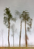 Trees reflection in water. Water reflection upside down create mosaic trees Royalty Free Stock Photography