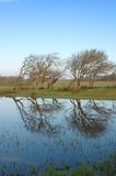 Trees and reflections. Landscape at Bolgheri WWF oasis in Tuscany with trees and reflections on the water Stock Photos