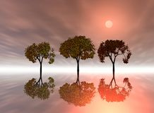 Trees with reflections Royalty Free Stock Photo