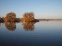 Trees reflections at dawn Royalty Free Stock Image