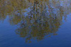 Trees reflekterade i bevattna fotografering för bildbyråer