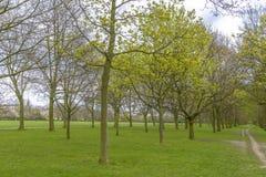 Trees in Regent's Park, London Stock Photos