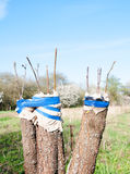 Trees renovation Stock Photo