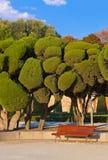 Trees at Retiro park - Madrid Stock Photo