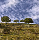 Trees on the ridge Stock Photography