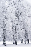 Trees in rime frost Stock Images