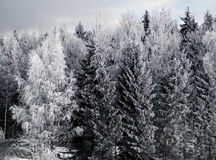 Trees with rime frost Stock Images