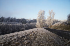 Trees with rime Stock Images