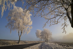 Trees with rime Royalty Free Stock Photography