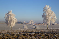 Trees with rime Royalty Free Stock Image
