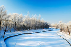 The trees with rime river side in winter Royalty Free Stock Images
