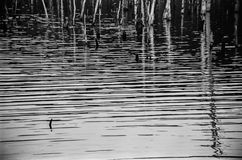 Trees and Ripples Royalty Free Stock Photo