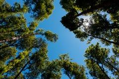 Trees rises at sky Stock Photo