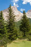 Trees rising from  the lake. Trees rising from mountain lake with steep slopes in the back Stock Images