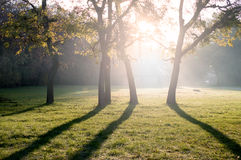 Trees in the rising sun. Mystical forest with sun ray and lens flare at morning royalty free stock photography