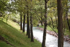 Trees and river. A river flowing with some trees on the riverbank Stock Photography