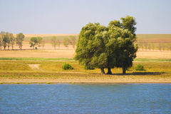 Trees on river banks Stock Photography