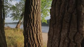 Trees on the river. Trees on the bank of river stock footage