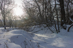 Trees on the river bank covered with snow. Stock Photo