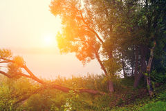 Trees on the river bank Royalty Free Stock Images