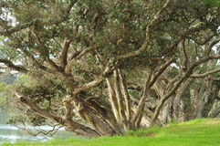 Trees on river banks Stock Images