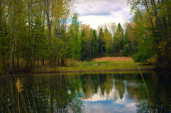 Trees and River. A beautiful landscape photo of trees and a river with reflections at the Barkhausen Wildfowl Preserve in Suamico, Wisconsin Royalty Free Stock Image