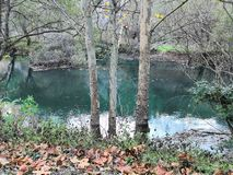 3 by the river. 3 trees by the river Krka, November royalty free stock image