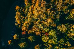 Autumn Coloured Threes stock image