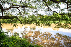 Trees beside the river. And reflection Stock Photos