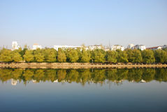 Trees in river side. With reflection in water Royalty Free Stock Photography