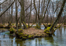 Trees in a river Royalty Free Stock Photography