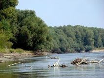 Trees on river. Summer day on the river. Dry tree fell into the water royalty free stock photography