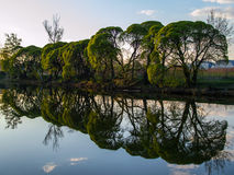 Trees by the river at sunset Stock Photo