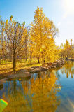 The trees riverain autumnal scenery Royalty Free Stock Images