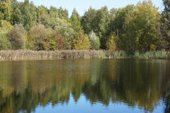 The trees on the riverbank. Royalty Free Stock Images