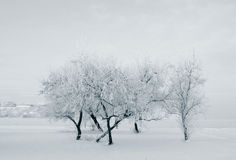 Trees at riverside at winter Royalty Free Stock Image