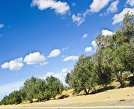 Trees on the road Royalty Free Stock Image